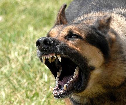 Animal Bites - DeVille Law Group